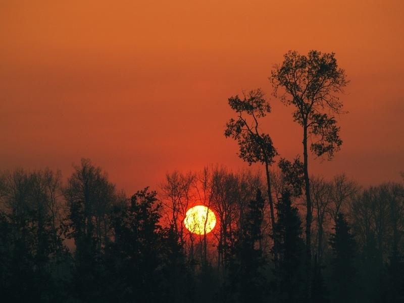 Солнце, деревья, закат