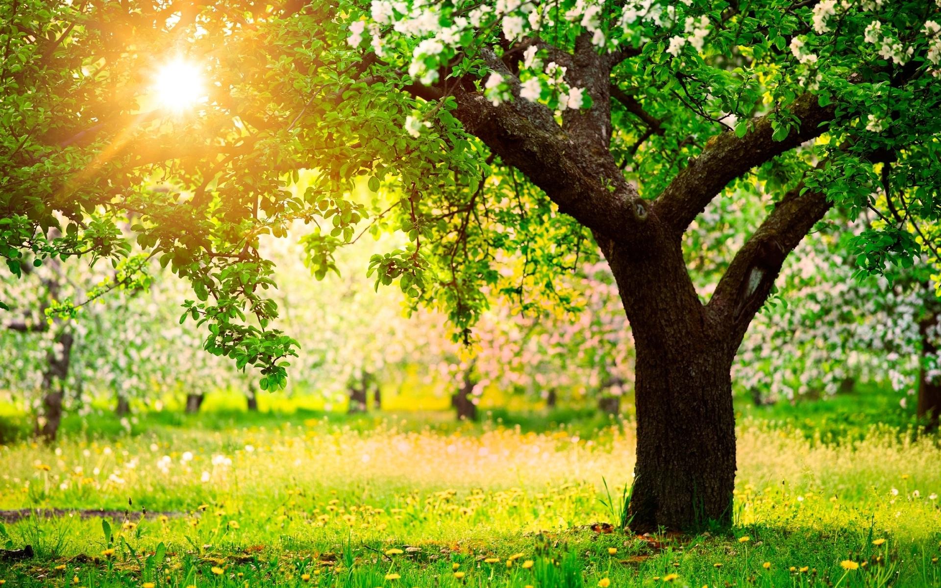 Весна солнце природа деревья яблони