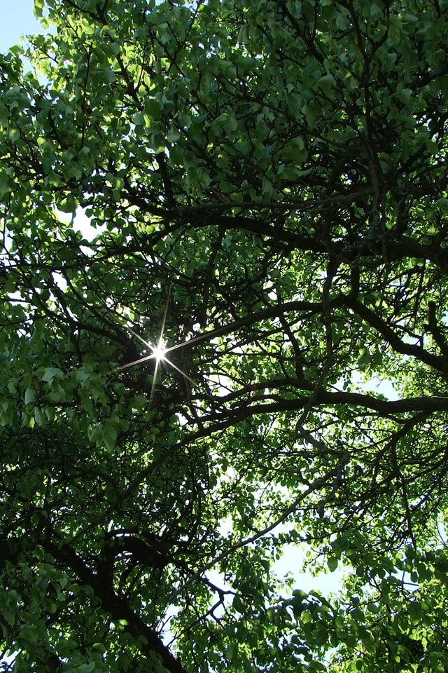 Лучи дерево весенние обои деревья
