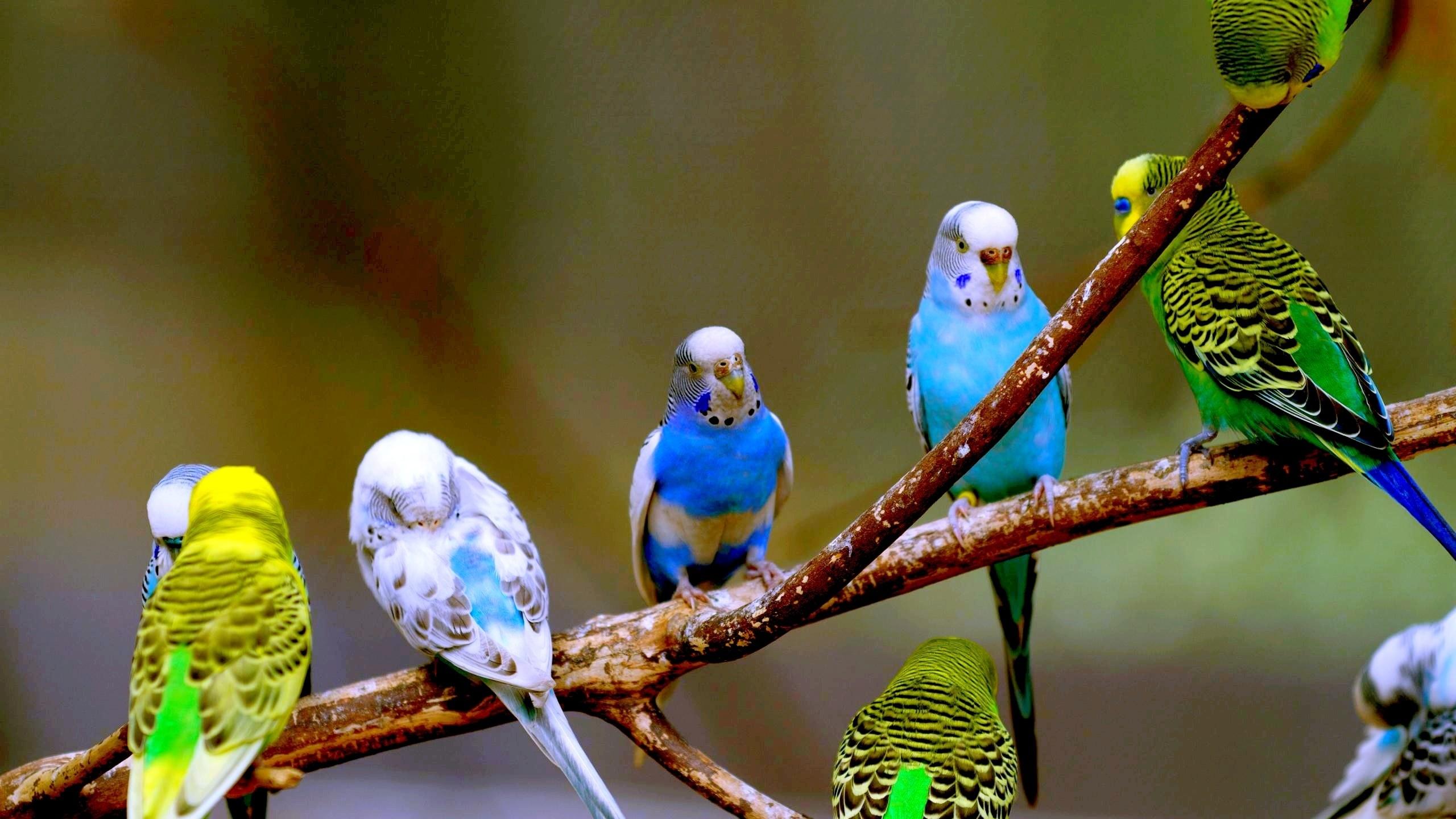 Смотри фото секс валнистава попугая 27 фотография