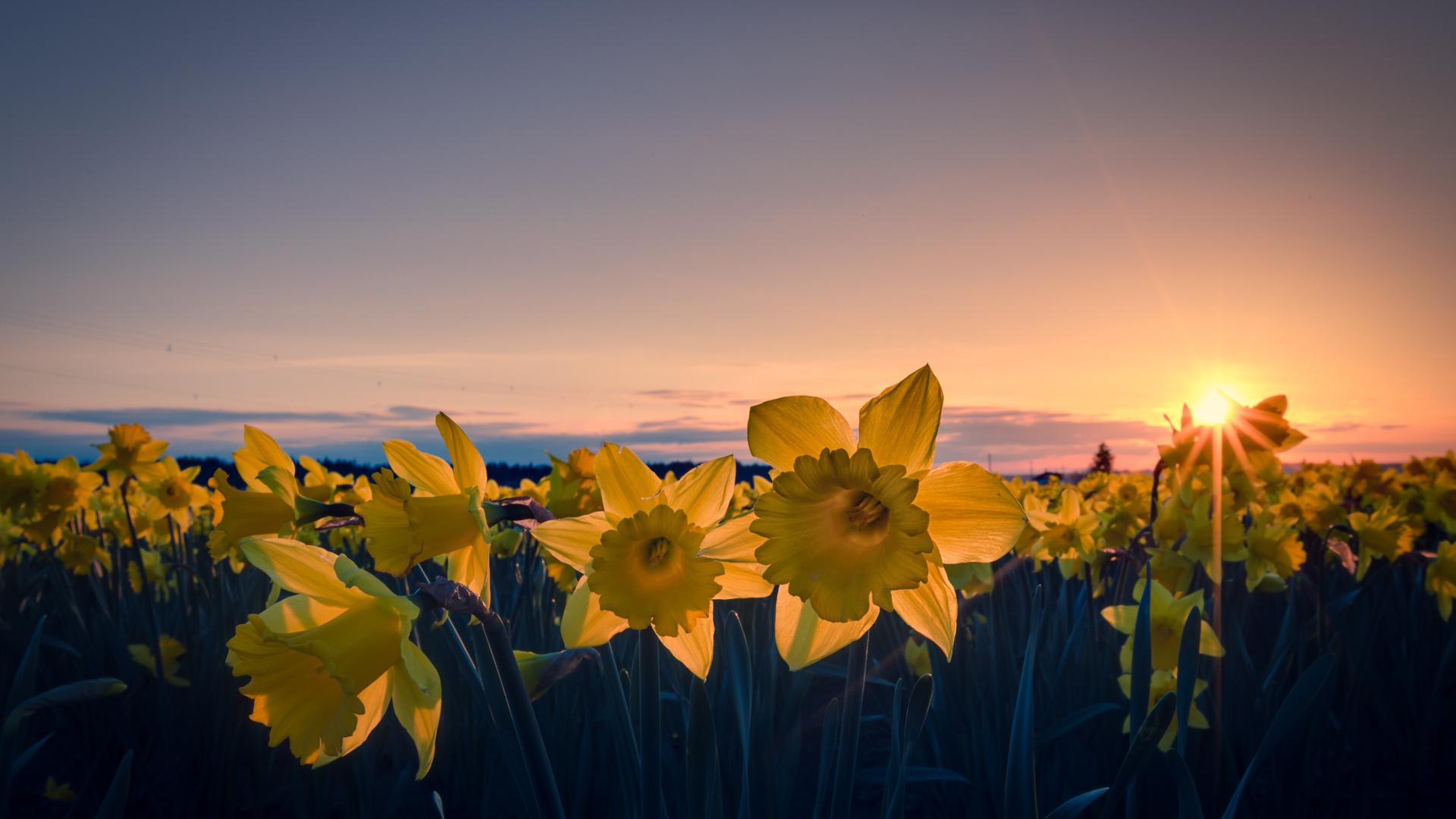 Цветы вечер