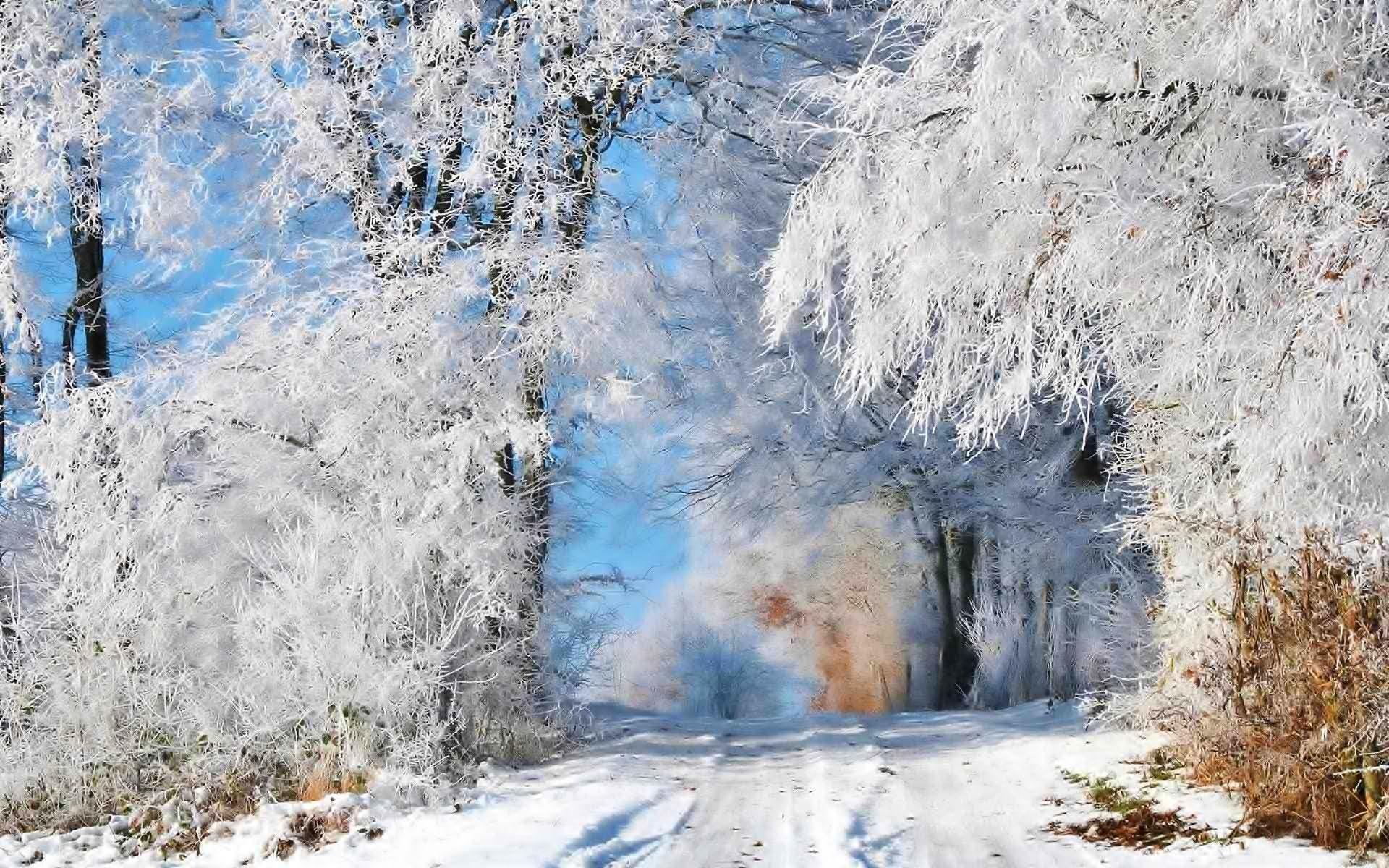 Зима лес деревья снег иней дорога
