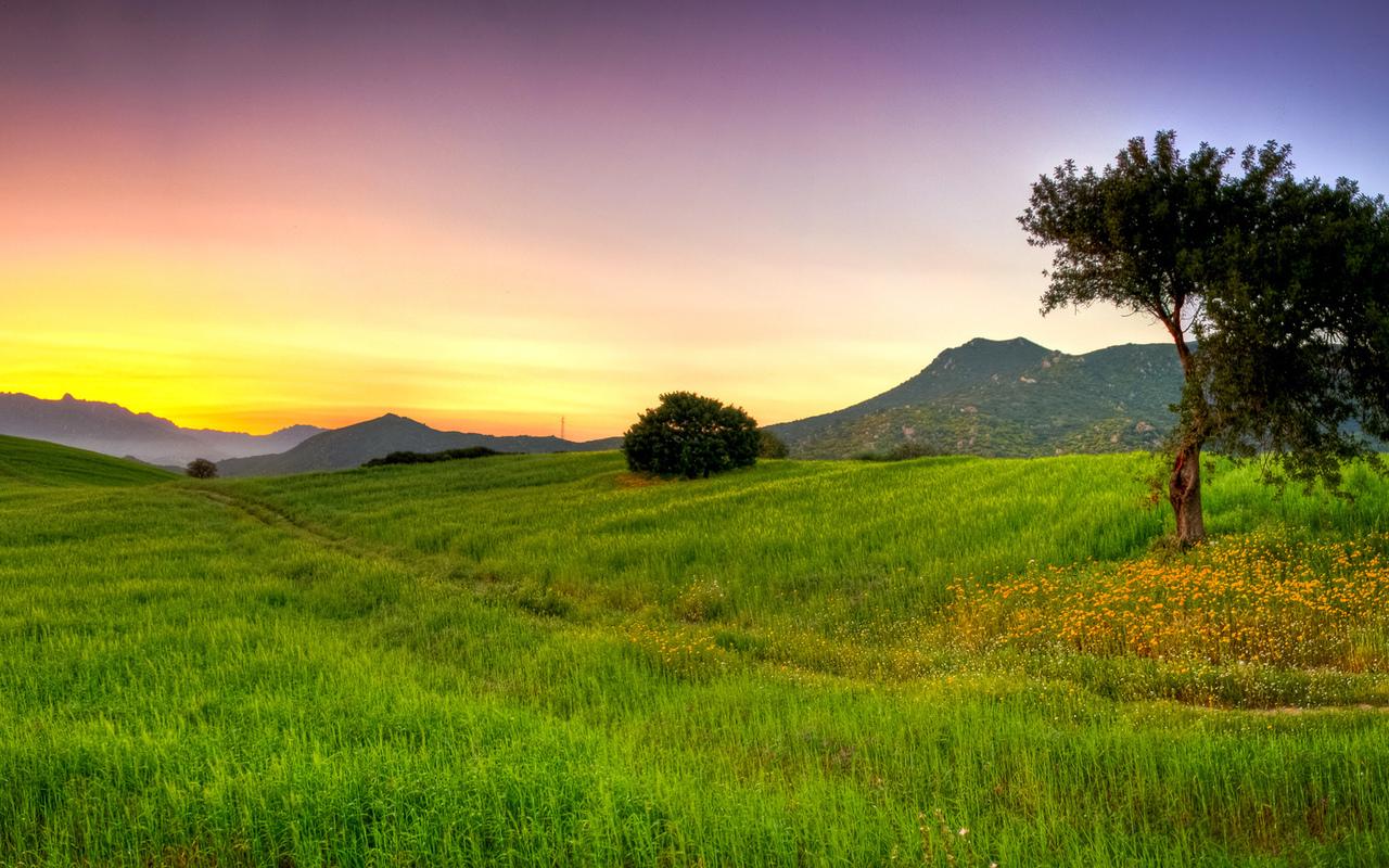 Природа трава дерево деревья