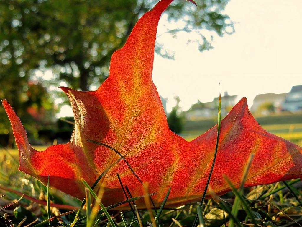 трава, лист, день