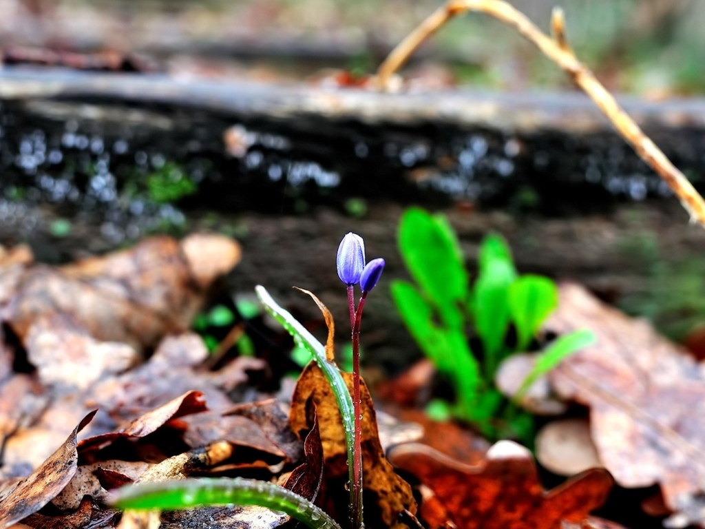 листва, цветок