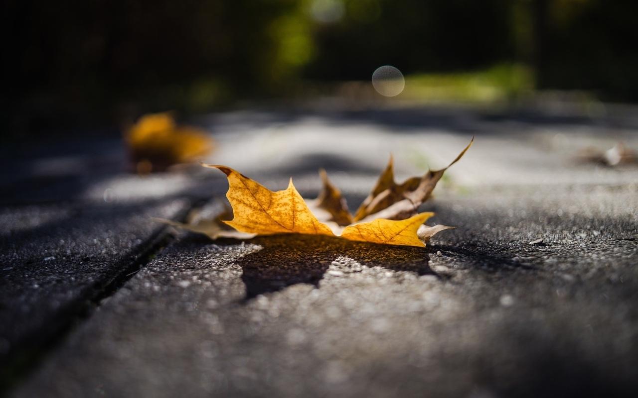 лист, дорога