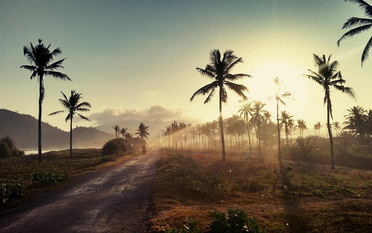 природа, дорога, пальмы, горы