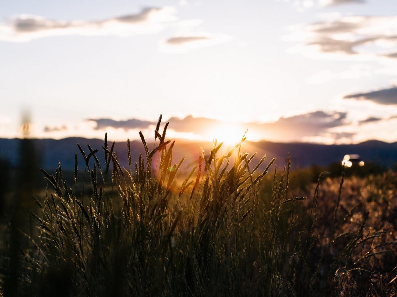 куст, закат, поле