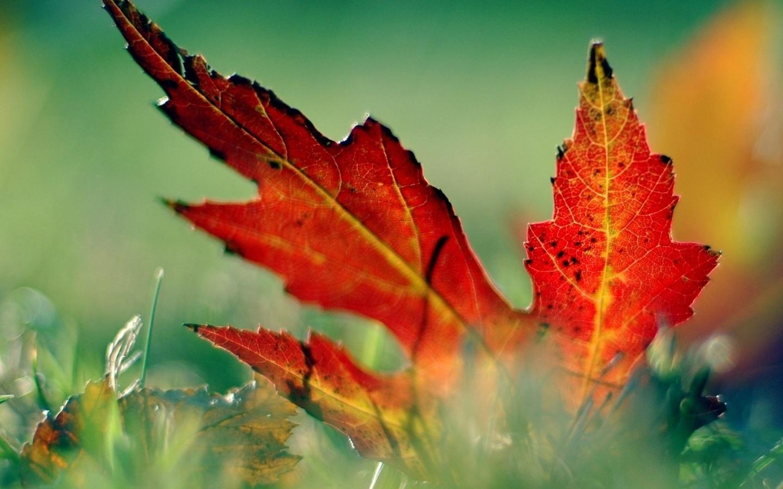лист, трава