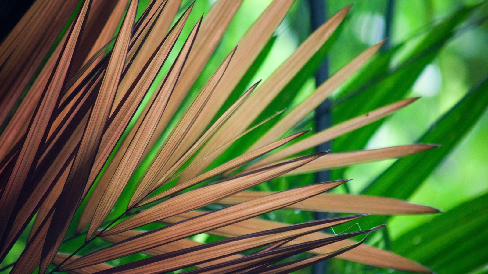 ветка, пальмы, макро тема