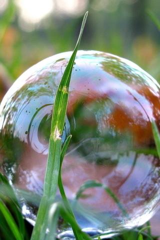 трава, мыльный пузырь