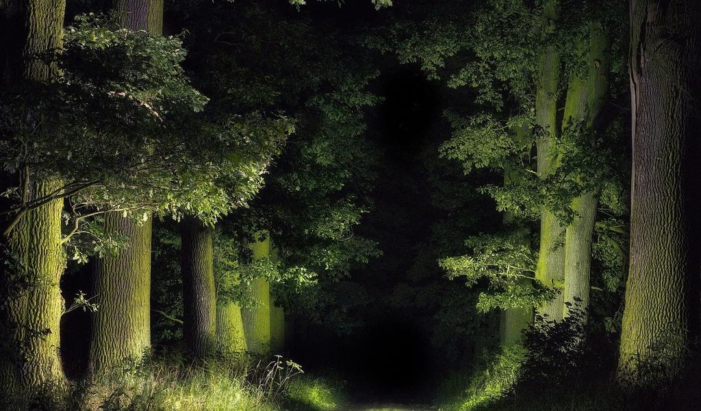дорога, в ночном, лесу, проф фото