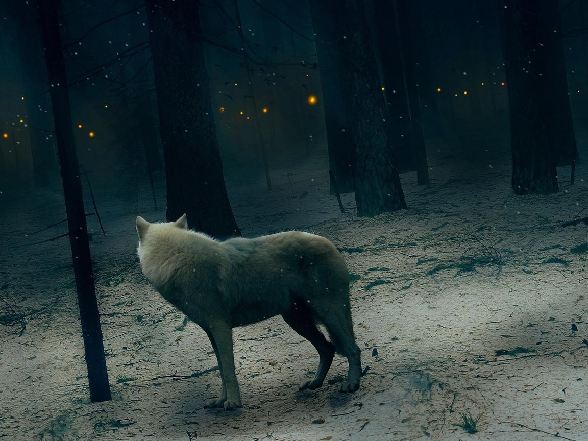 волк, зима, лес, ночь