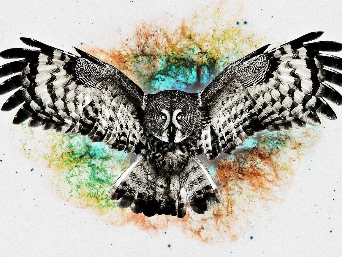 птица, сова, креатив, фон, полет