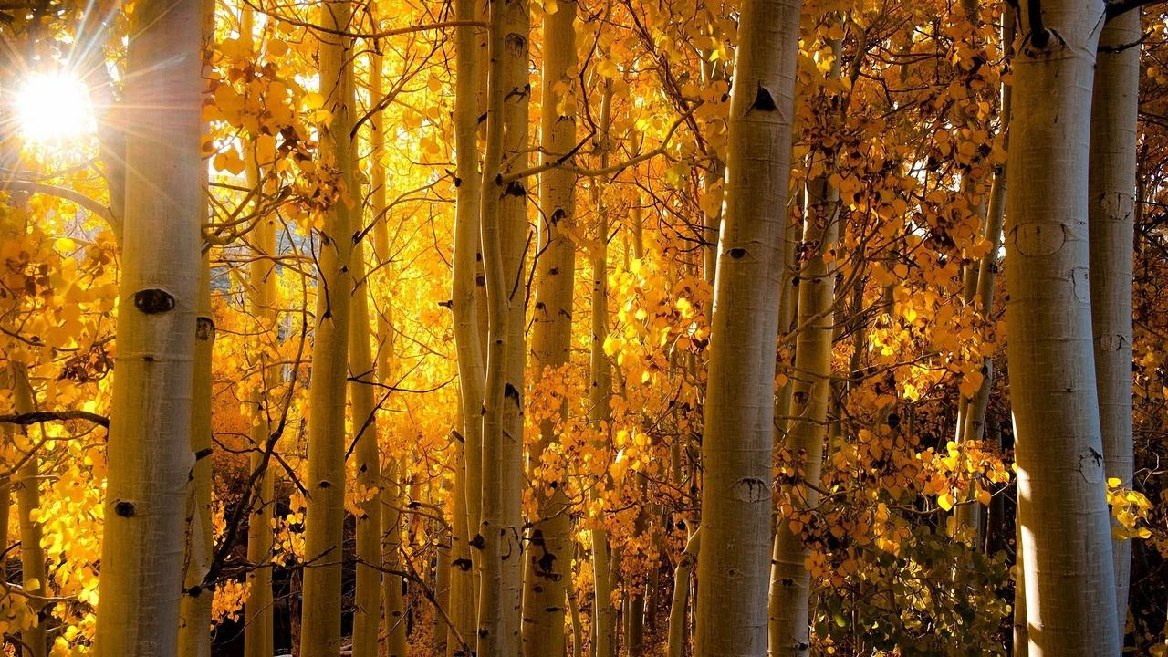природа, осень, лес, колорадо
