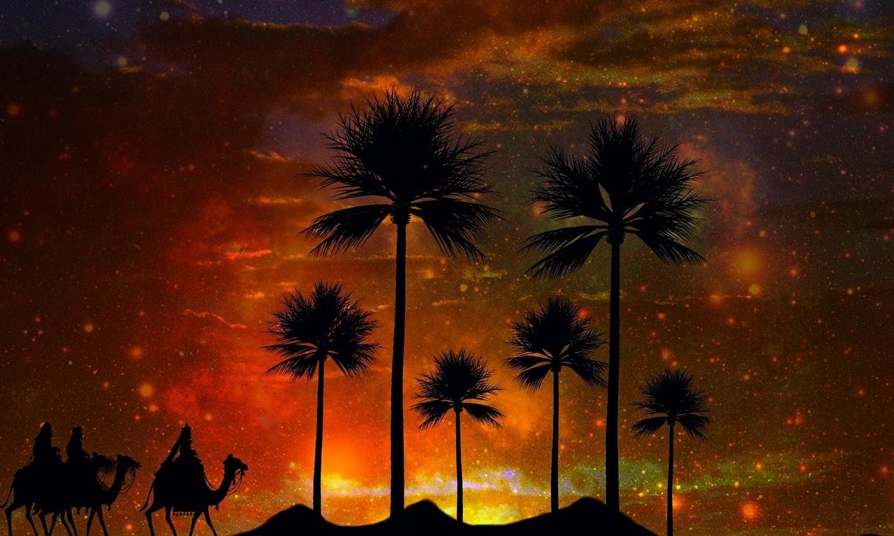 караван, верблюды, пустыня, пальмы