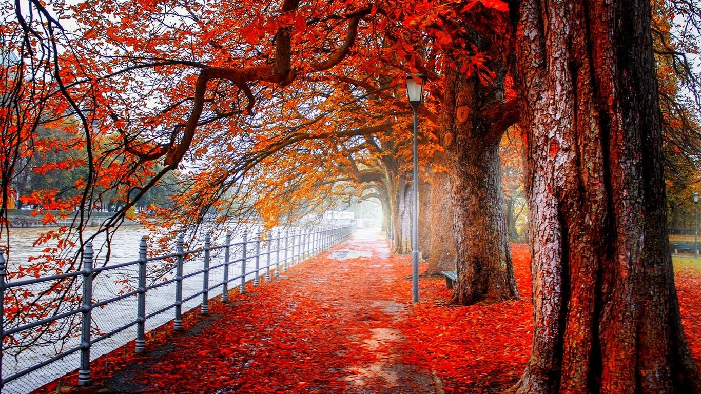 аллея, набережная, листья, осень