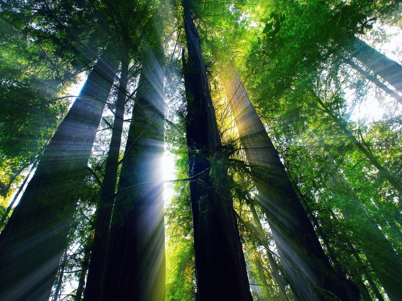 деревья, солнечный свет