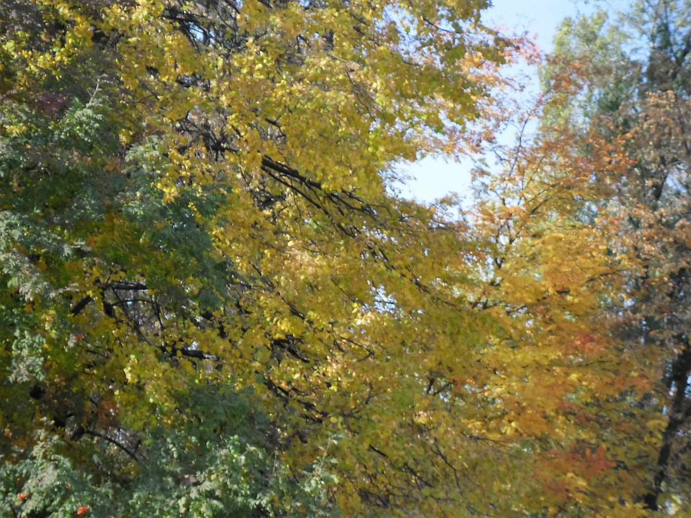 жёлтый, цвет, осень