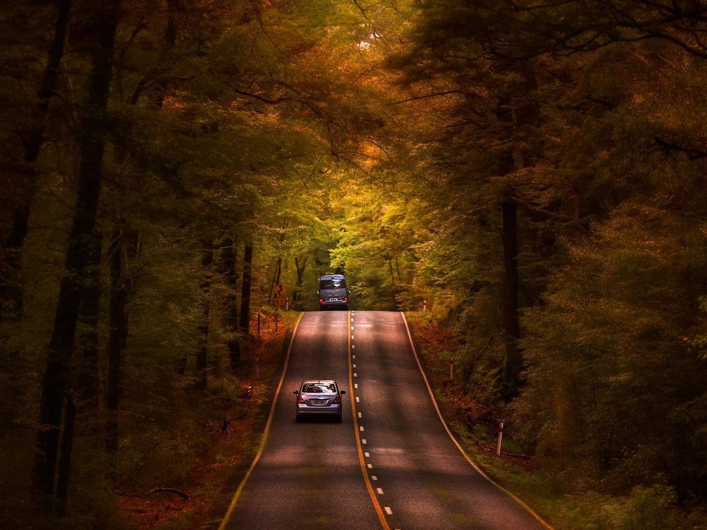 природа, лес, осень, дорога, авто