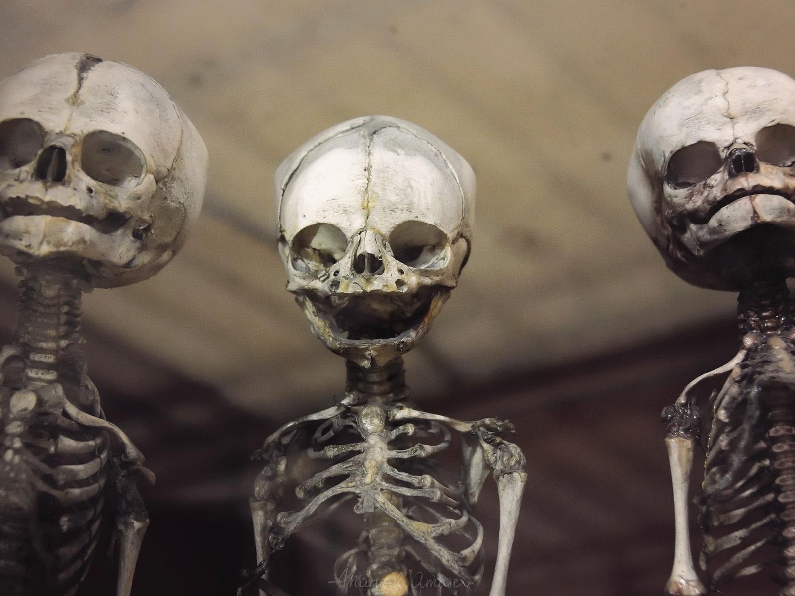 три, скелета