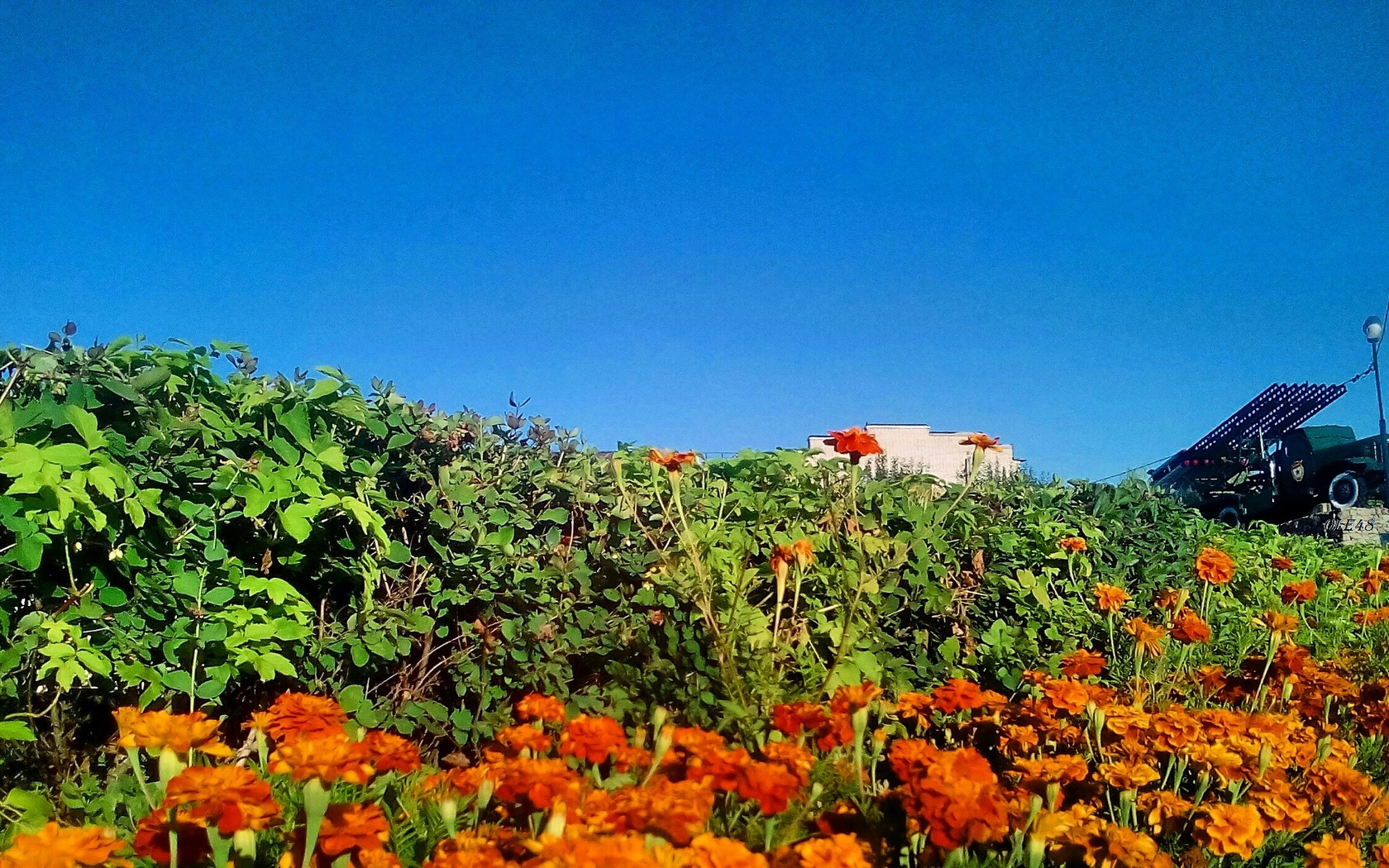 катюша, город, цветы