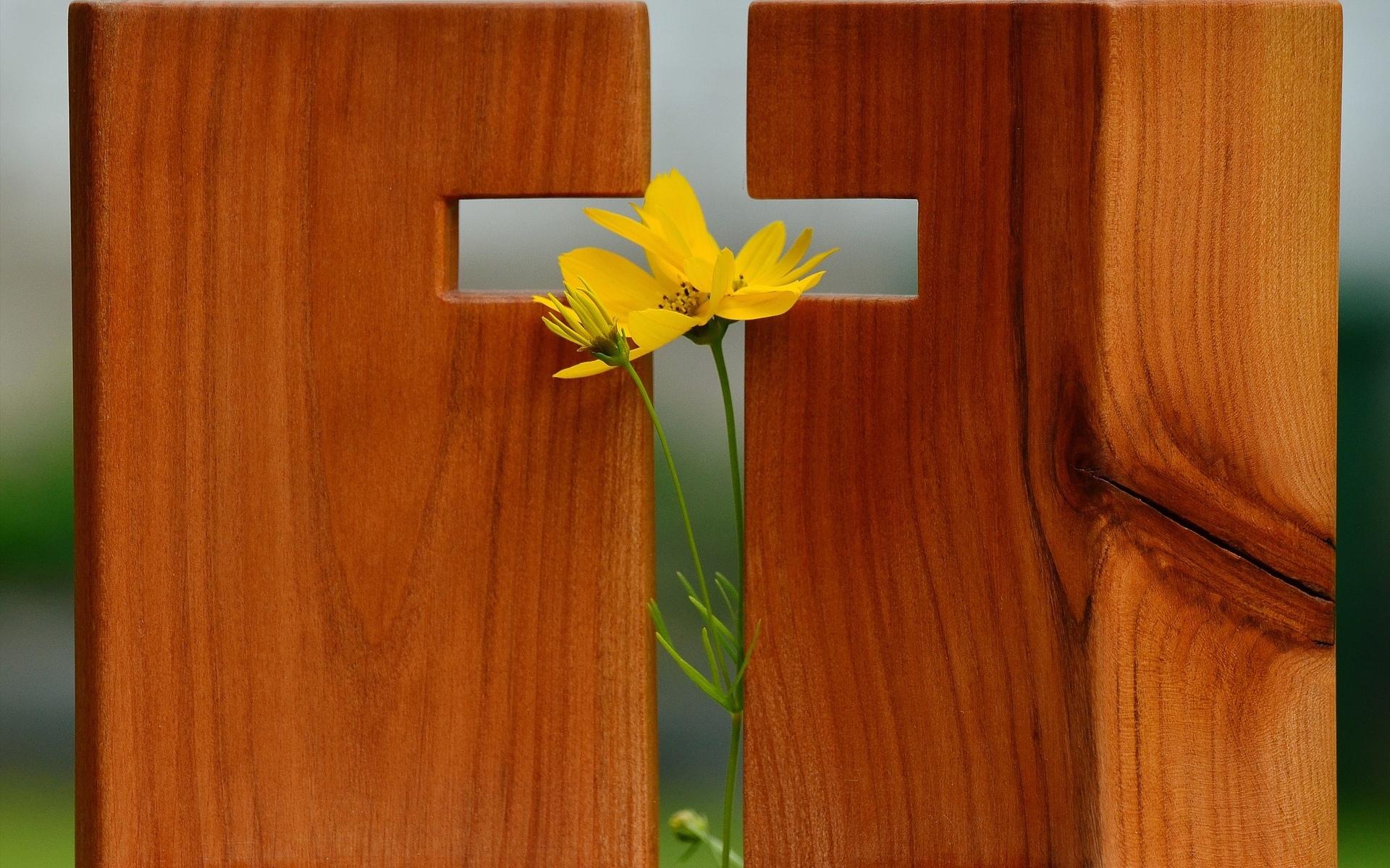 доски, в виде, креста, цветок