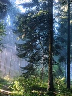 лес, лучи солнца