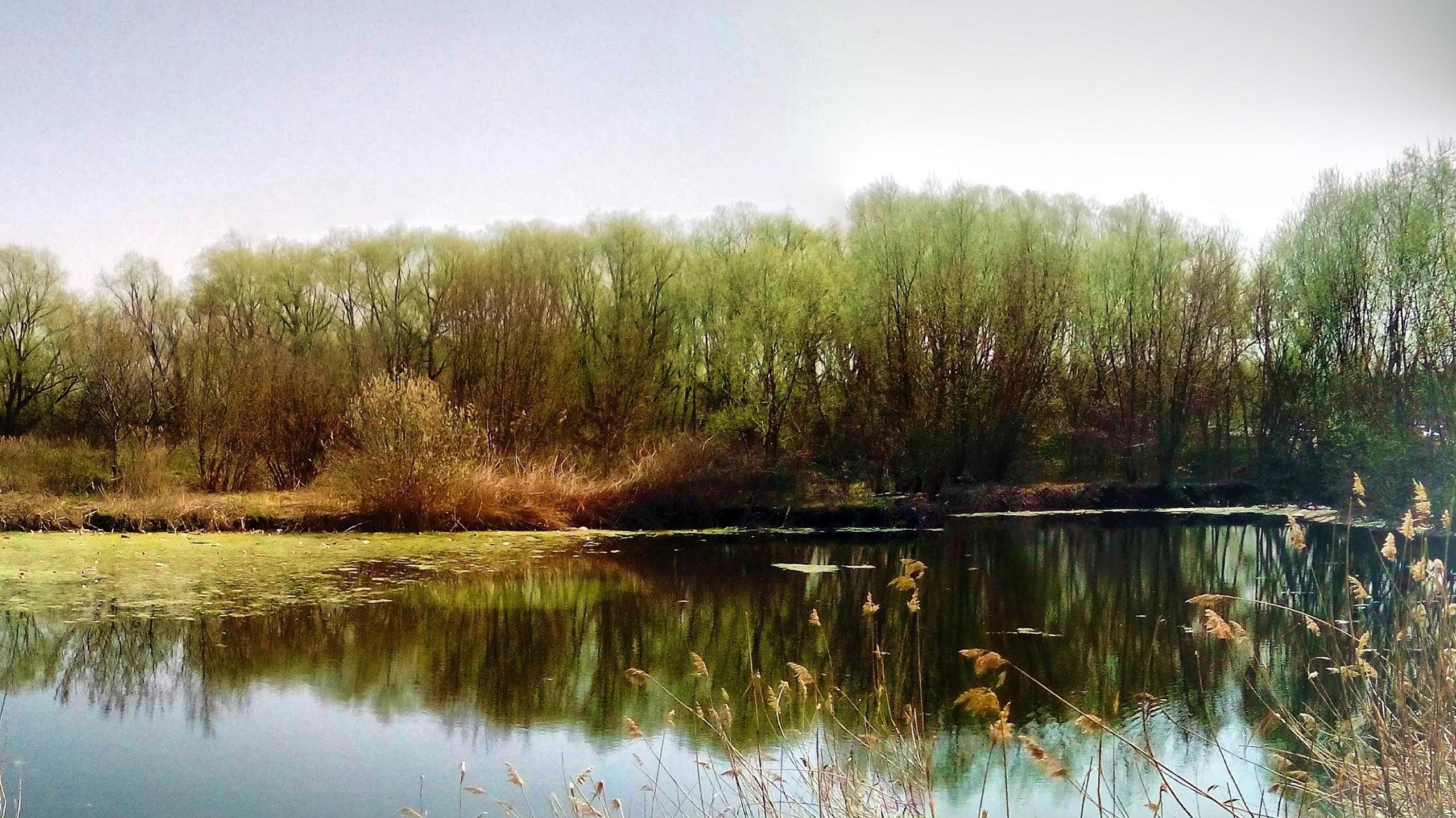 природа, водоём