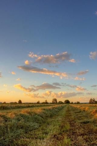 поле, небо