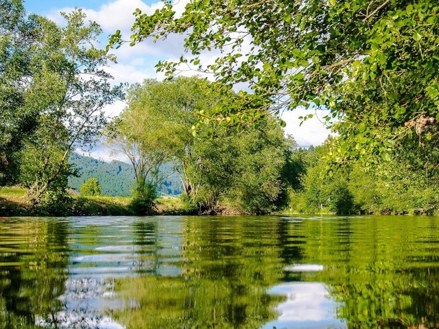 озеро, отражение, деревьев