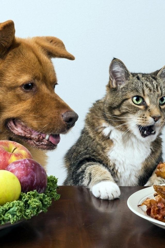 собака, кот, еда, овощи, фрукты, курица, юмор