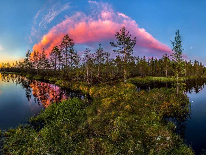 розовое, облако, над лесом, река, природа