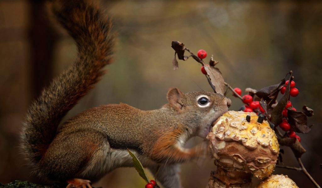 животные, белка, гриб, принимать пищу
