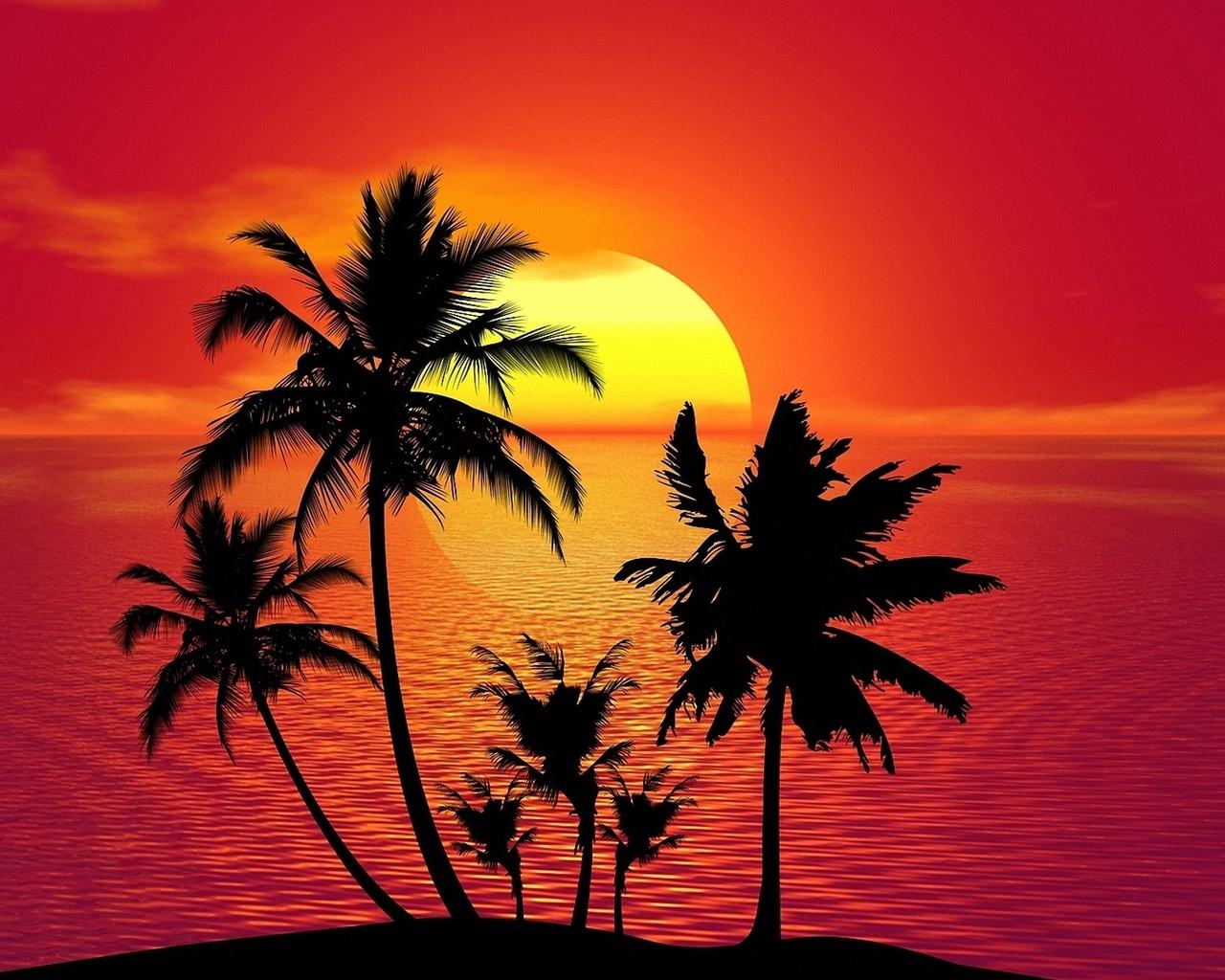 пальмы, на фоне, моря, и заката