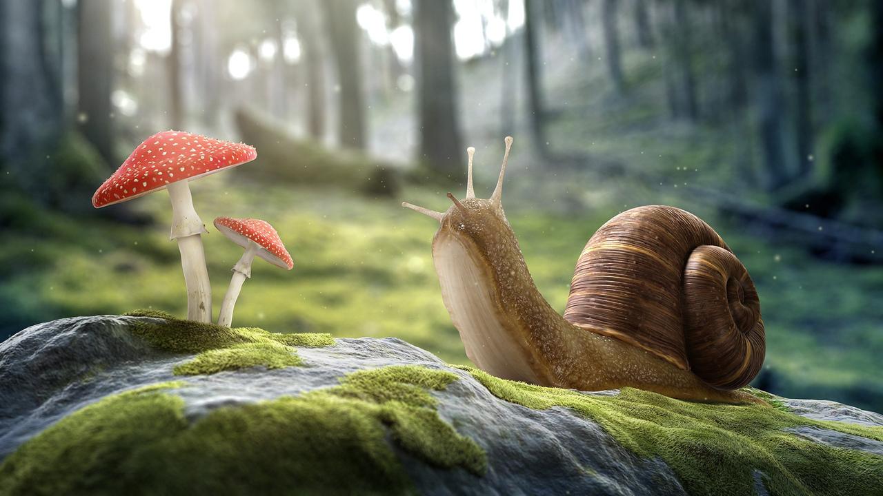 произведение искусства, гриб, лес, улитка