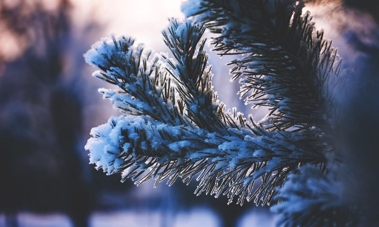 лес, деревья, снег