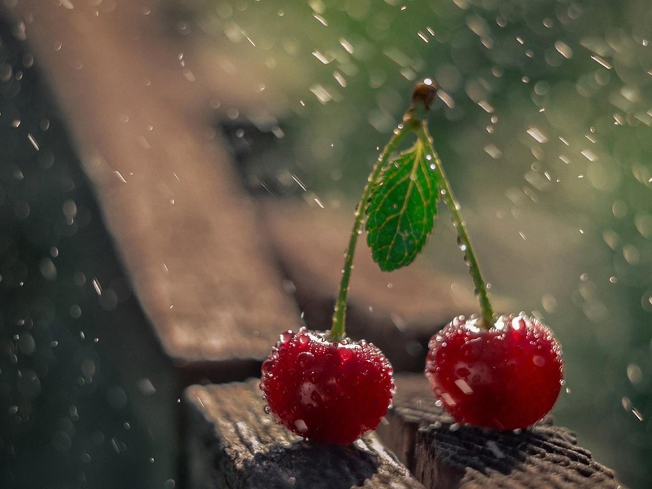 две, вишенки, под каплями, дождя
