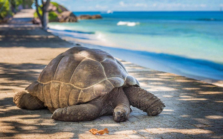 черепаха, на набережной