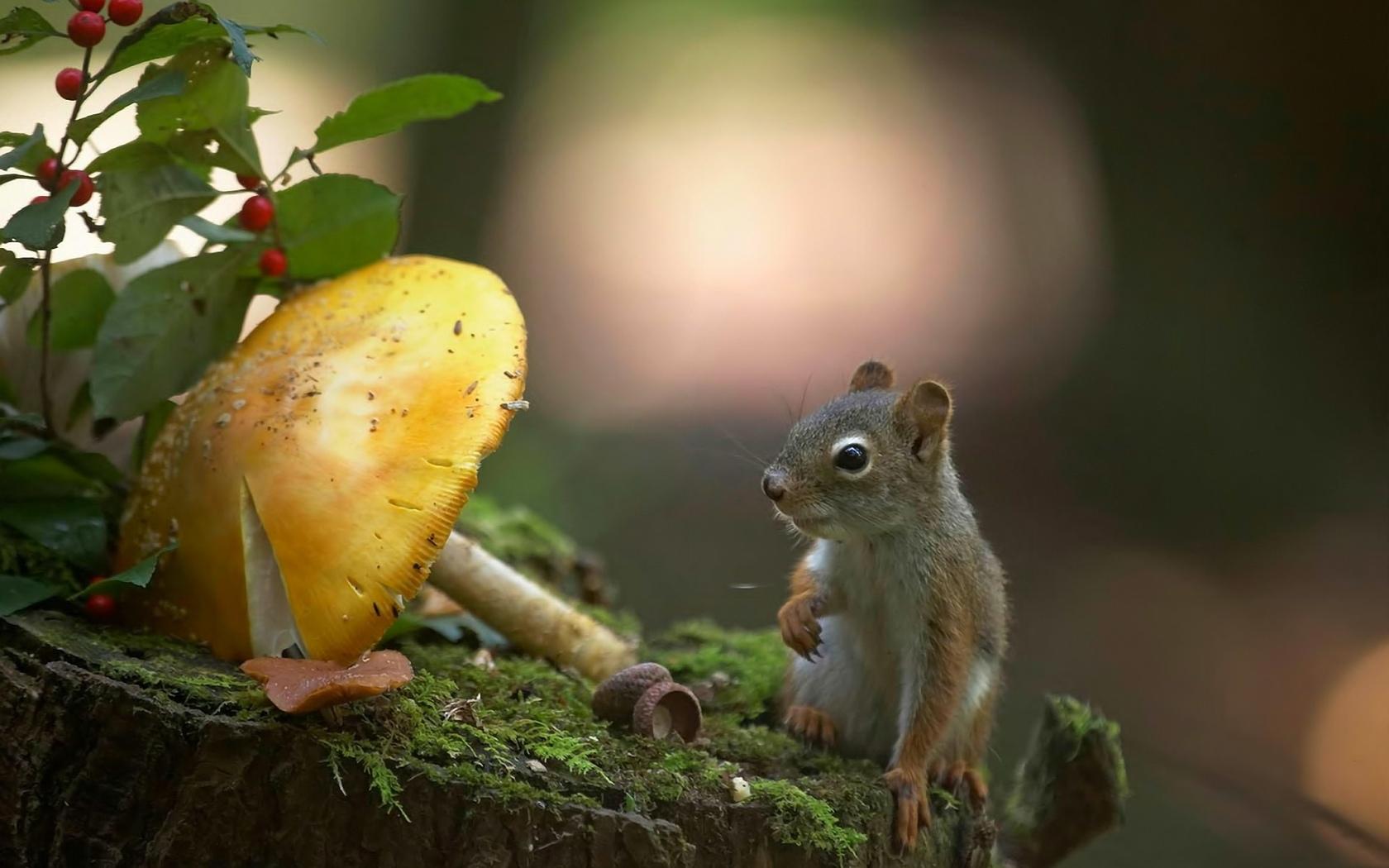 животные, мох, макрос, гриб, бурундуки