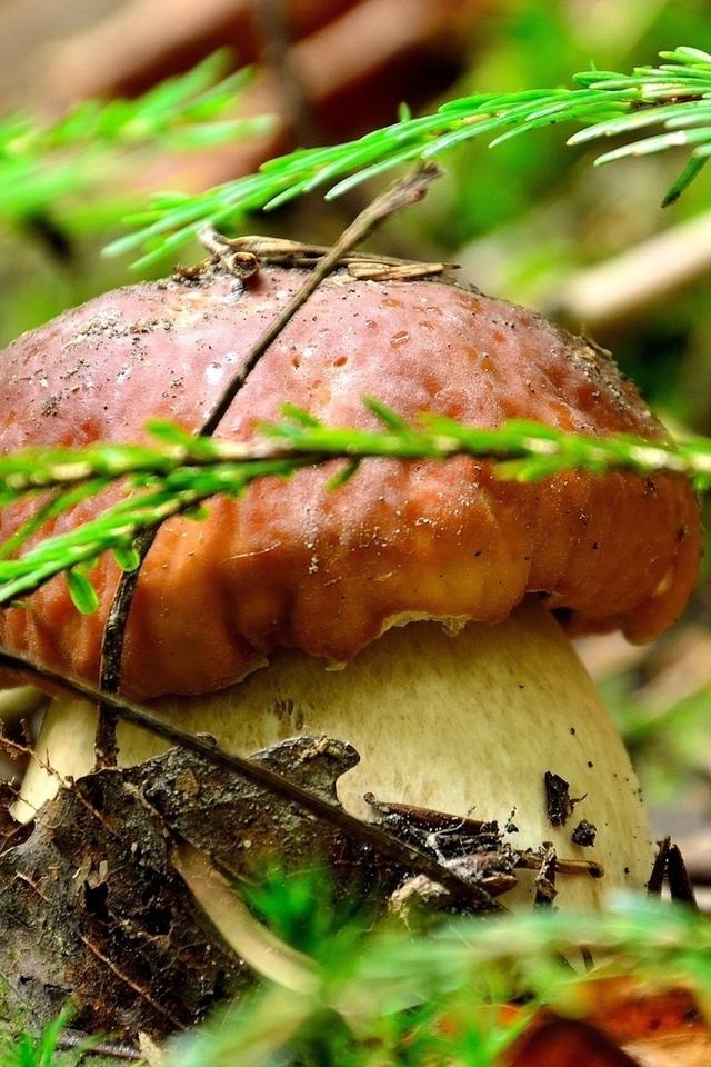 макрос, гриб